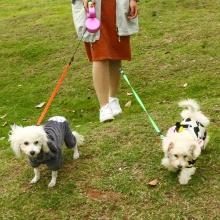 Dual Doggie Pet Leash